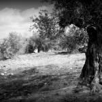 """Sebastia, Palestine"" by Michele1x2"