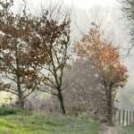 """Bronzed Trees,"" by carol29hynes"