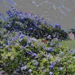 """""""Blue Purple"""" by catoninefineart"""
