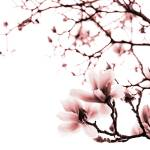 """Magnolia - monochrome"" by LauraMelis"
