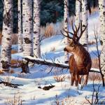 """Mule Deer"" by scott_fenton55"