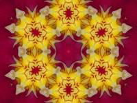 Orchid Mandala Beauty 12