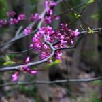 """""""Autumn Pink"""" by Peenki"""