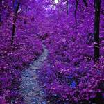 """Purple Forest"" by ideaproductions"