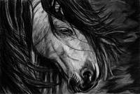 Horse in charcoal
