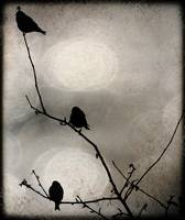 Birds on a twig