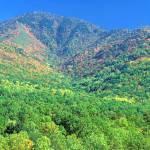 """Smoky Mountain - LeConte Mountain in Autumn"" by timseaver"