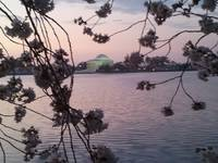 Jefferson Memorial Sunrise with Cherry Blossoms
