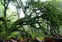20101022 Tree by Tom Spaulding