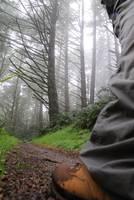 20101022 On Meadow Trail by Tom Spaulding