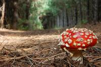 20100107 Mushroom on a Forest Trail by Tom Spaulding