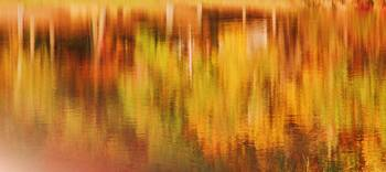 Abstract Orange and Gold Reflections