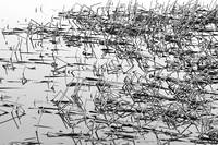 Sticks in The Water Abstract BW