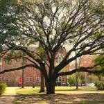 """Old tree on Alabama campus"" by HarryLipson"