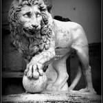 """Lion of Florence"" by 10thMusePhotography"