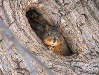 Squirrel den hole