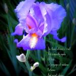 """Song of the Iris"" by 10thMusePhotography"