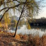 """""""Spring arrives at the Lagoon at Veterans Park"""" by johndecember"""