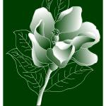 """""""Magnolia Grandis"""" by ysapy"""