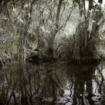 """Florida Everglades 2"" by madeline"