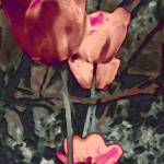 """""""Tulip Abstract"""" by MissDawn"""