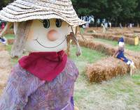 Scarecrow Pumpkin Patch