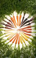 Color Wheel of Carrots
