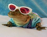 Alligator In Shades...