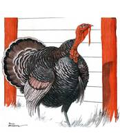 Vintage Turkey illustration