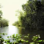 """Florida Everglades 6"" by madeline"
