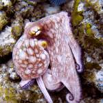 """Octopus at Eel Garden"" by Serena"