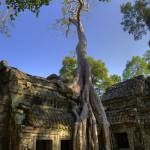 """Famous Tree at Ta Prohm"" by RaymondLee"