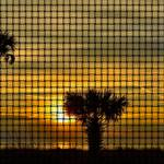 """3 Palms Against a Cloudy Sunset Weave"" by RichardJZentner"