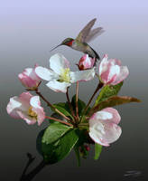 Apple Blossom and Hummingbird