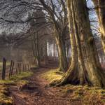 """""""HDR of Trees in Ousbrough Wood"""" by raypritchard"""