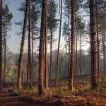"""""""Ousbrough Woods"""" by raypritchard"""