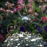 """My Garden"" by LjTaft"