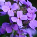 """""""Painted Purple"""" by LjTaft"""