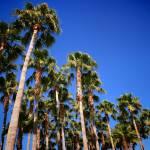 """Palms"" by JosephPlotz"