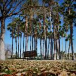 """""""Goodyear Park"""" by JosephPlotz"""