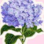 """Hazy Purple Hydrangea"" by marycollins"