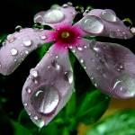 """rain drops"" by aruphaldar"