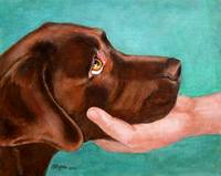 Chocolate Lab Head In Hand
