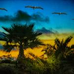 """Tropical Sunset With Pelicans"" by ChrisLord"