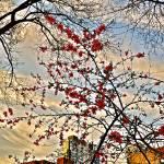 """Spring Awakening"" by rrothstein"