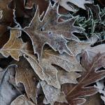 """""""Frosty Leaves"""" by LMixedup"""