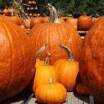 """""""Pumpkin Patch 2"""" by LMixedup"""