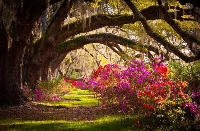 Charleston Sc Magnolia Plantation Gardens Memory By Dave Allen