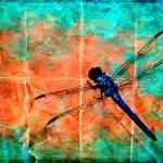 """Dragonfly"" by HWP"