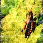 """Grasshopper"" by HWP"